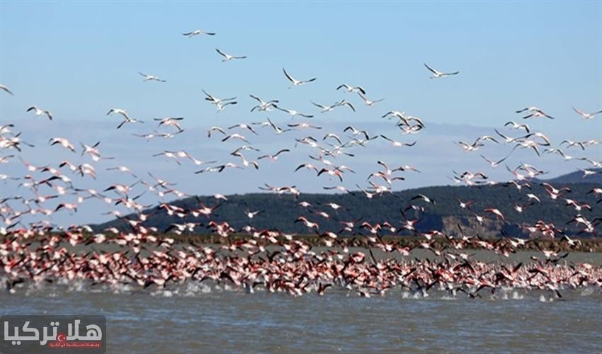 بحيرة غالا عالم الطيور والطبيعة