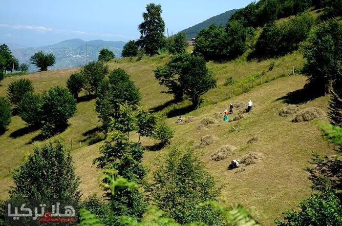 مرتفعات حاجكالي